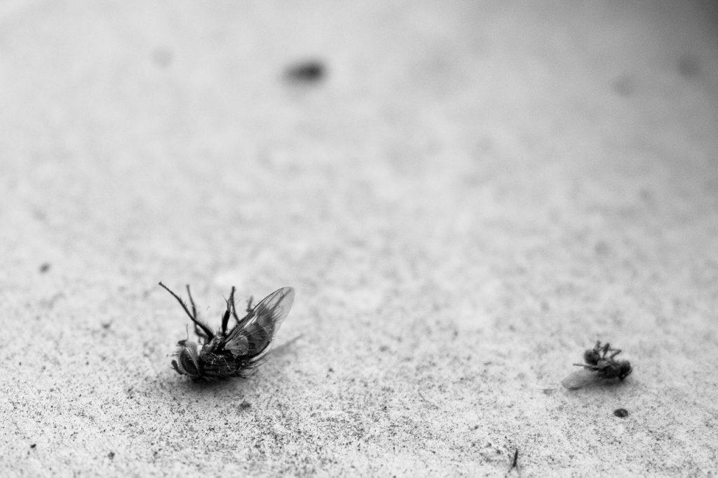 חרקים מתים